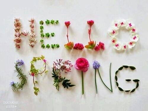 amazing, cold, colors, cool, flowers, frase, love, spring