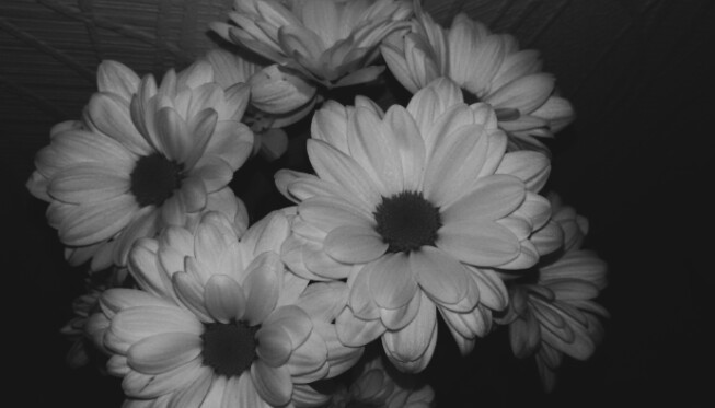 b&w, beautiful, chamomile, dark, flowers, grunge, spring, black&white