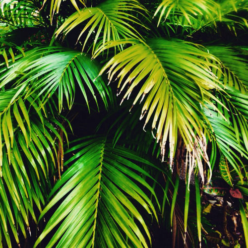 green palm leaves summer - photo #15