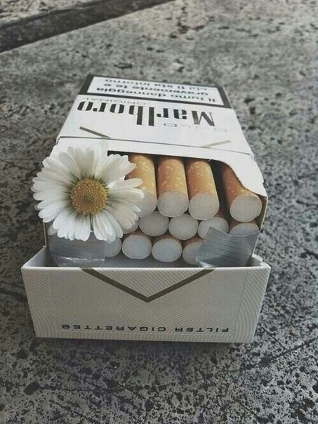 alternative, chamomile, cigarette, daisy, flower, grunge, lovely, marlboro, pale, sad, smoke, vintage