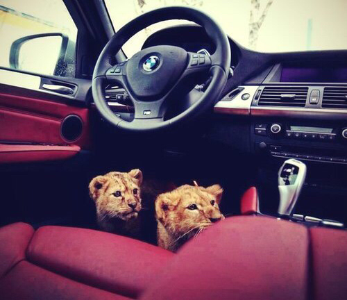 adorable, animals, car and cute