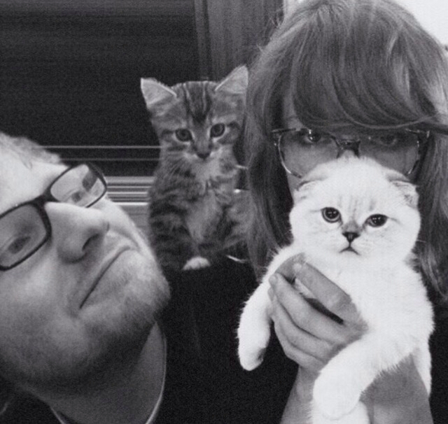 cats, ed sheeran and taylor swift