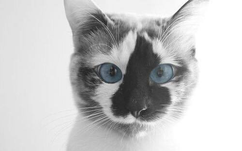 adorable, animals, aww, baby, blue eyes, cat, cute, eyes, hipster, kitten, omg, pretty, so cute, vintage, beautiful, kitty