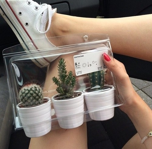 cactus, converse, decor, girls, tumblr