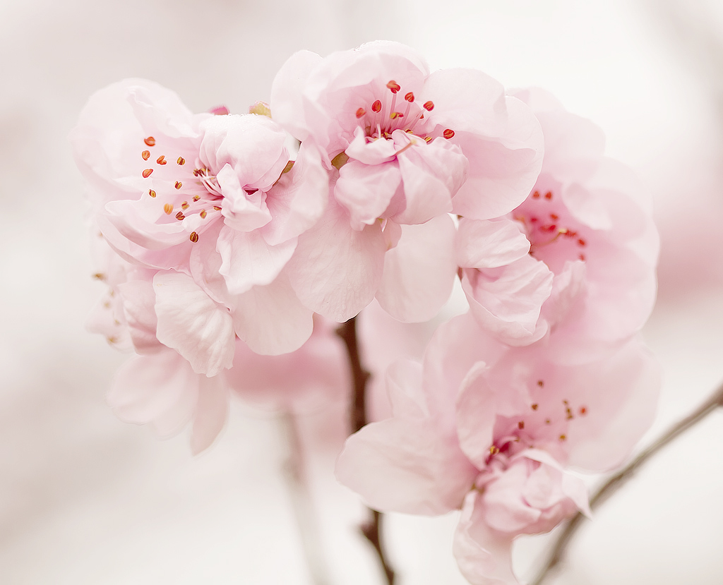dreaming, expectations, expecting, find a way, imagination, mind, nature, pastel pink, refresh, thinking, spring in summer