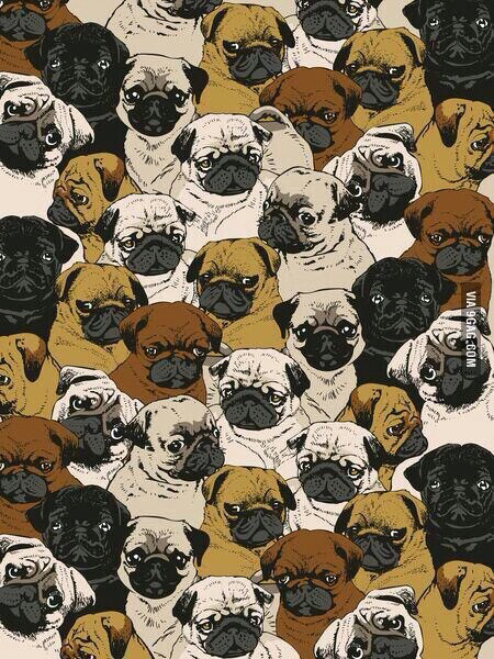 backgrounds, brown, cute, dogs, kawaii, pug, pugs, wallpaper