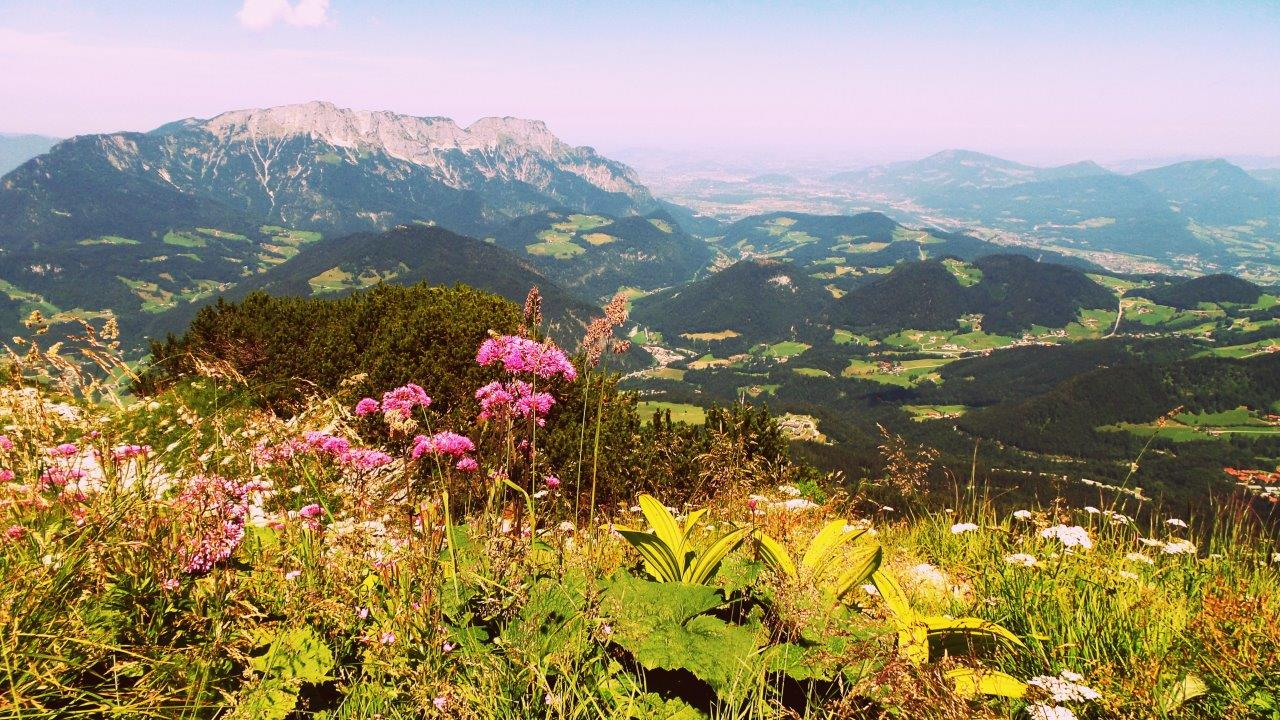 alps, austria, beautiful, flowers, hiking, landscape, mountains, nature, summer, traveling