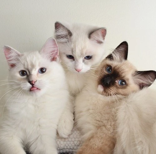 adorbs, animals, cats and cute