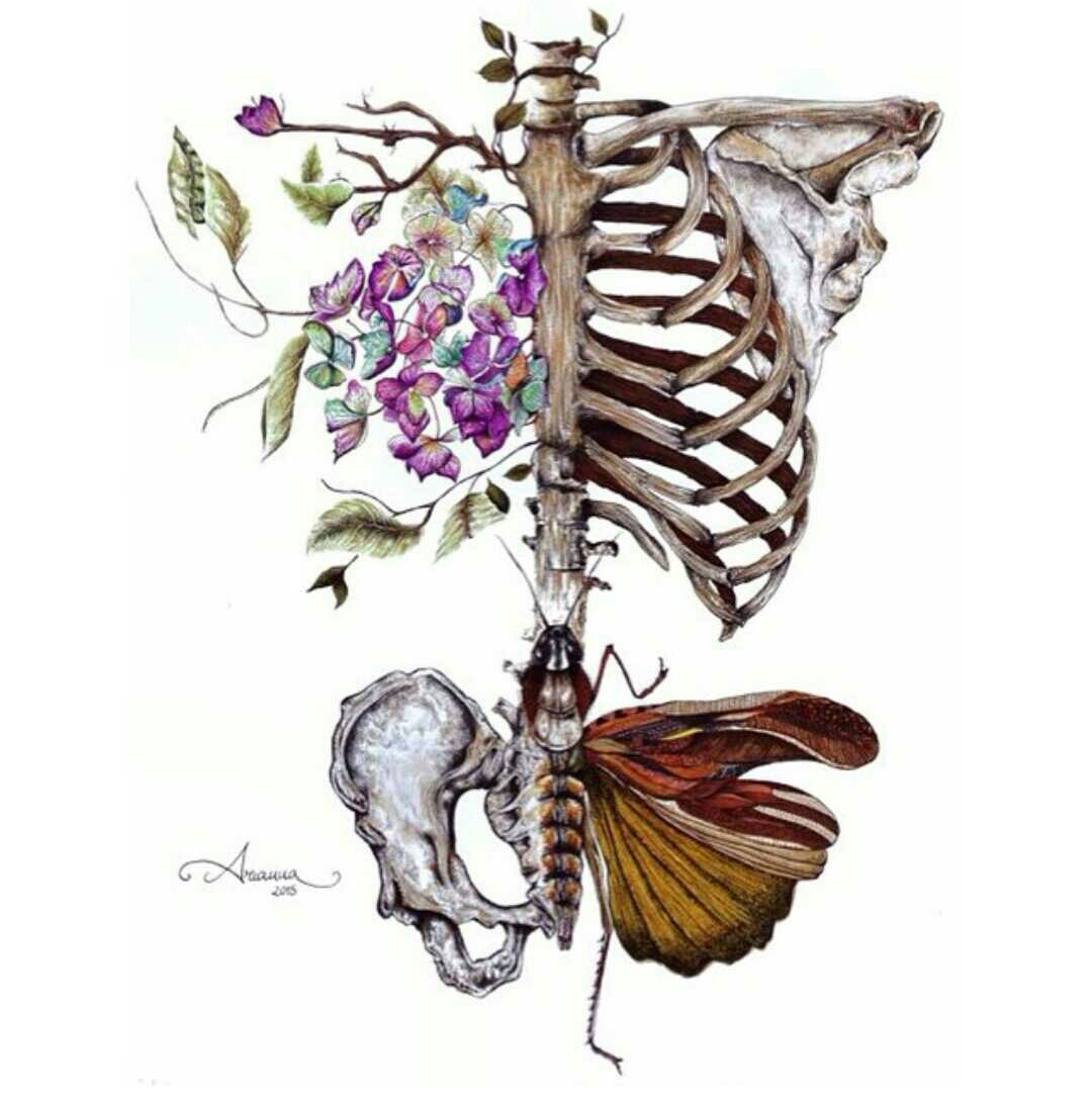 art, body, butterfly, colors, creative, human, medicine, science