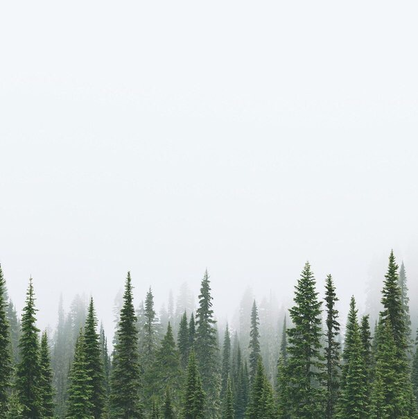 forest, green, mist, nature, spruce, tumblr, wallpaper, wood