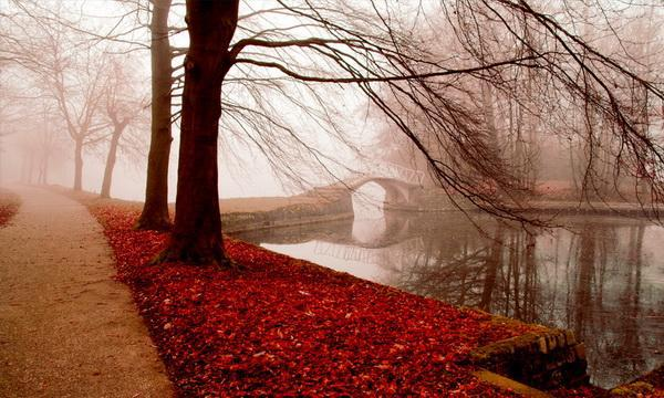 autumn, bridge, fall, fog, lake, leaves, love, mist, peace, photography, red, river, road, serenity, tree, water