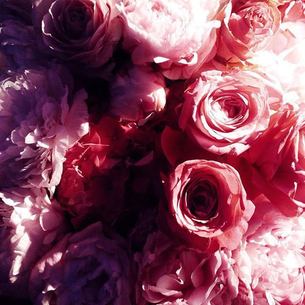 adorable, amazing, awesome, background, beautiful, beauty, bright, chrysanthemum, colorful, cute, floral, flowers, gift, girly, inspiration, love, luxurious, peony, perfect, pink, plant, pretty, roses, vintage, wonderful, ♥