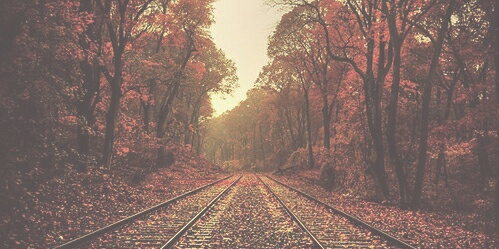 autumn, beautiful, fall, forest, leaves, railway, trees