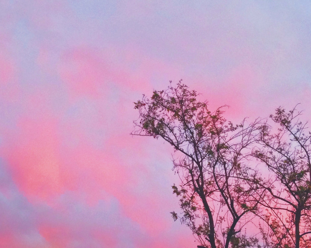 blue, chile, deeply, girly, love, nature, nice, nubes, photo, pink, santiago, sky, sun, sunset, tree, u, wallpaper, sinfiltro