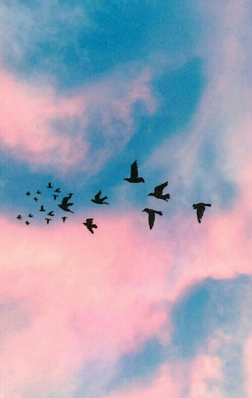 sky, black, birds, clouds, tumblr - image #3737041 by ...