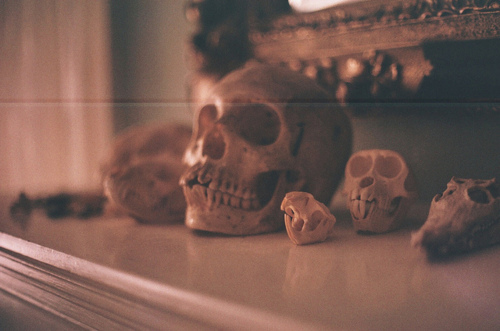 amazing, bones, hipster, indie, photography, pretty, skull, vintage