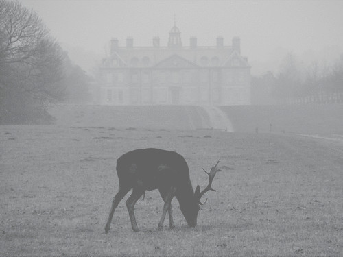 animal, antlers, art, black and white, building