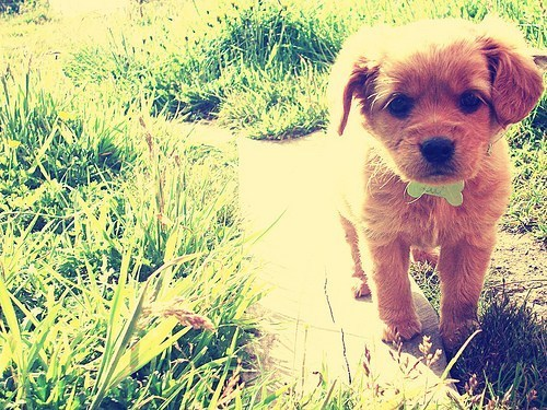 beautiful, cute, cutie, dog, photography, puppy, sweet