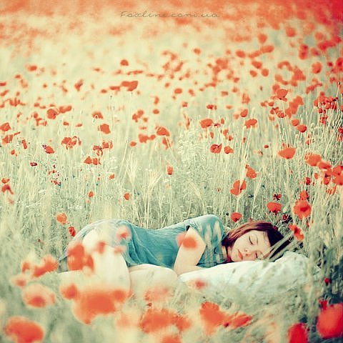 beautiful, dream, dreaming, flower, flowers