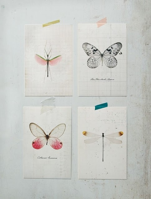 bug, butterfly, design, dragonfly