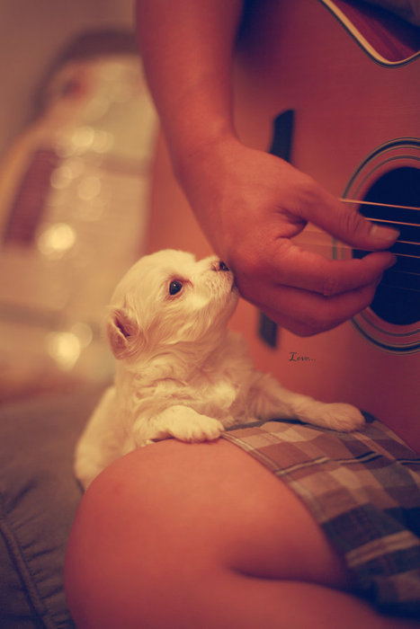 cachorrinho, cute, dog, guitar, kiss