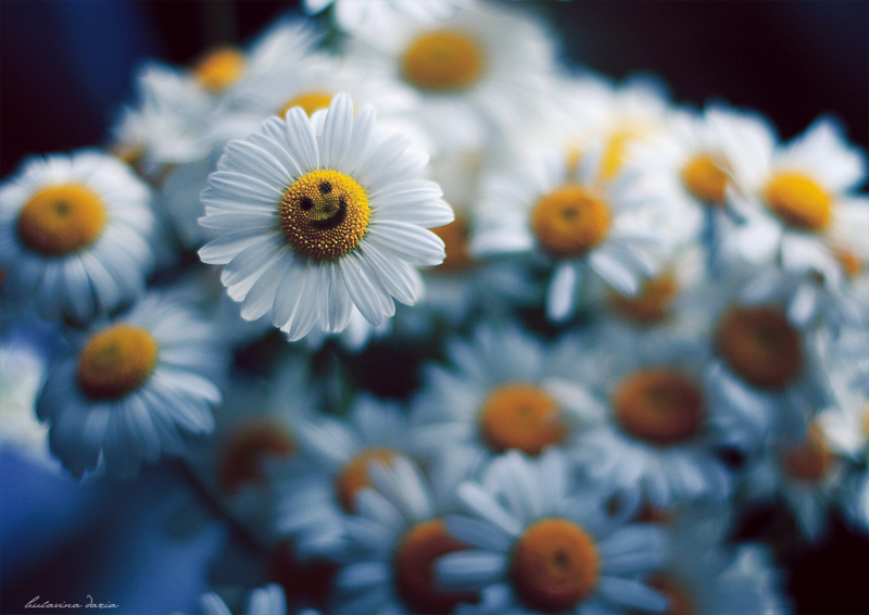 flowers, smile, white