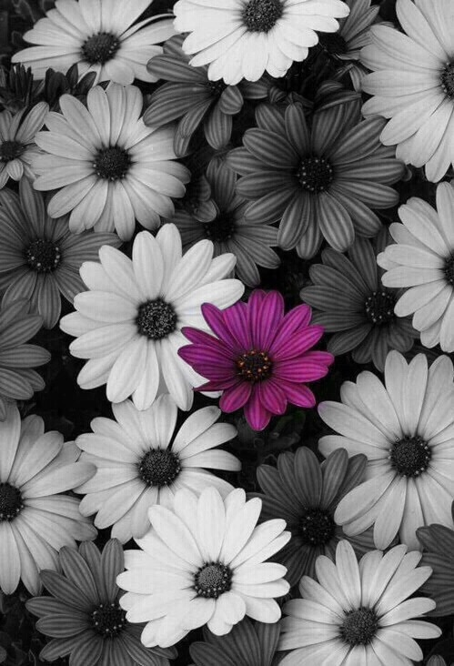 Background Black And White Flowers Image 3843111 By