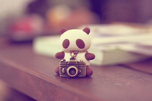 bear, book, brown, camera, cute, little, panda, photo, small, table, white