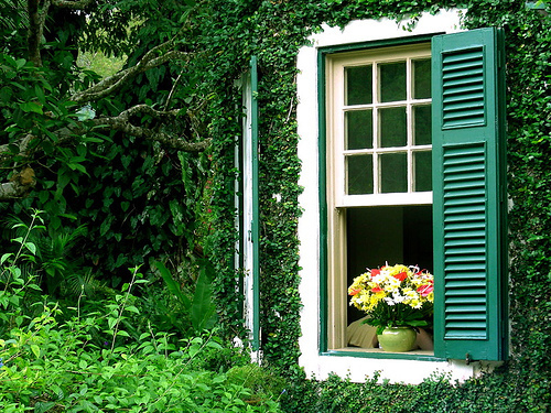 flowers, green, inspiring, window