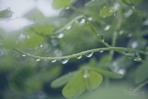 green, nature, plant, rain, rain drops
