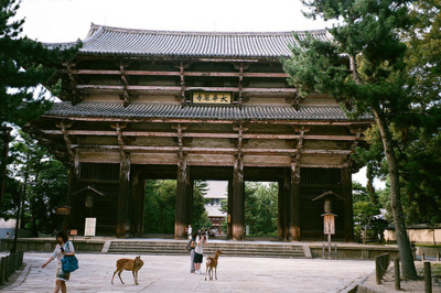 animal, architecture, beauty, deer, japan