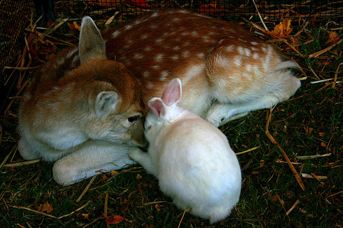 animals, love, rabbit, separate with comma, veal