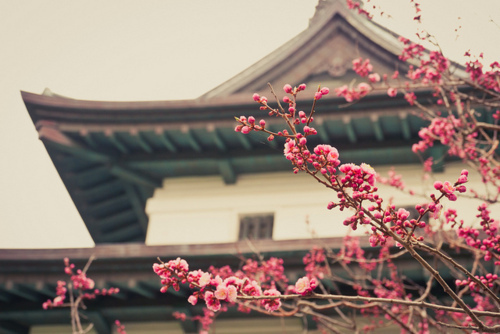 asia, building, flowers, japan, japanese, sakura, temple, tree