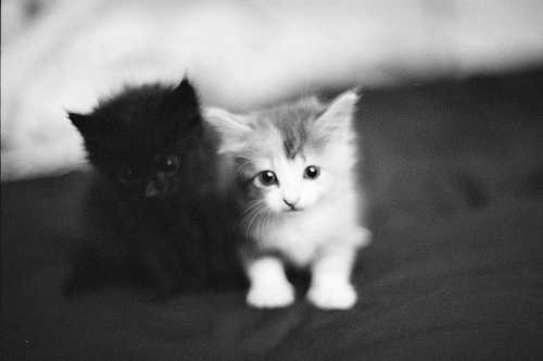 baby, black, cat, cute, gatinhos - image #195623 on Favim.com