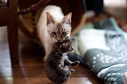 baby, cat, cute, kitten, mother