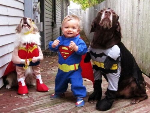 batman, cosplay, costume, cute, dog