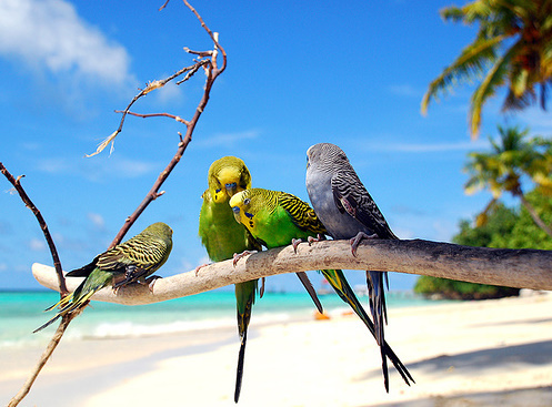 beach, birds, cute, nature, parrots
