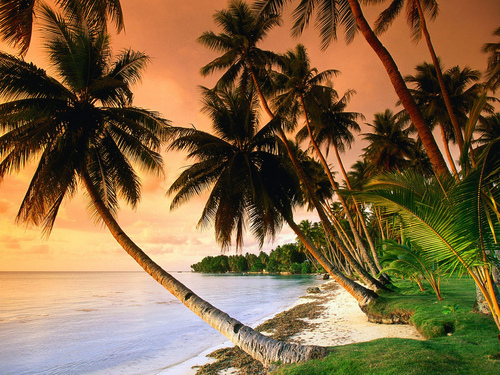 beach, nature, palm trees, palms, summer