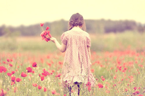 bouquet, field, flowers, girl, photo