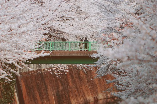 bridge, cherry blossom, flowers, japan, japanese