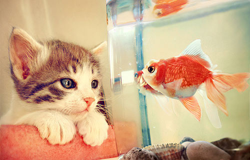 cat, cute, fish