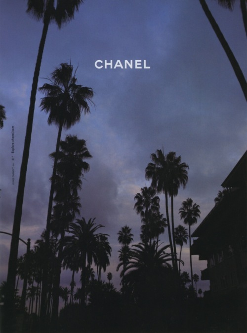 chanel, palm, palm tree, purple, sky