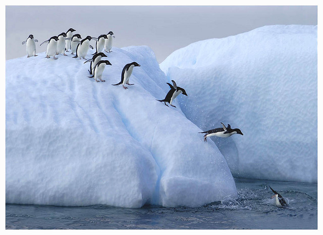 cool, flow, ice, ice flow, penguin