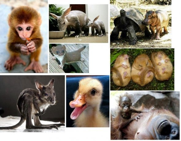 cute animals, duck, little animals, monkey