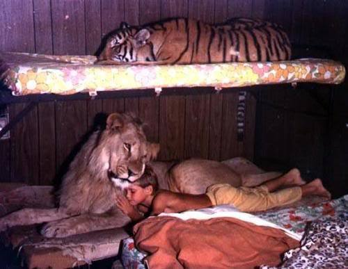 an jungel boy, bed, boy, cute, lion, sleep, tiger