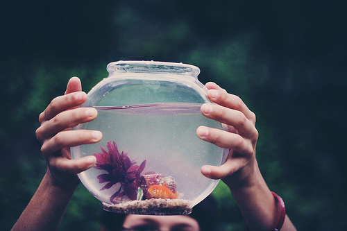animal, beautifl, cute, fish, girl, glass, goldfish, hand, hands, lovely, nature, outside, pet, pretty, sweet, tree, trees, water