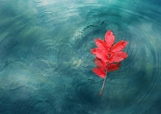art, autumn, beautiful, beauty, blue, drops, leaf, nature, photo, photography, rain, red, ripples, water