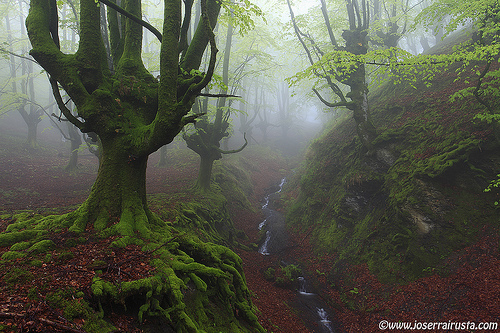 basque, fog, forest, gorbea, green, leaves, mist, moss, park, red, river, trees
