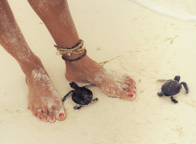 beach, feet, sand, turtles