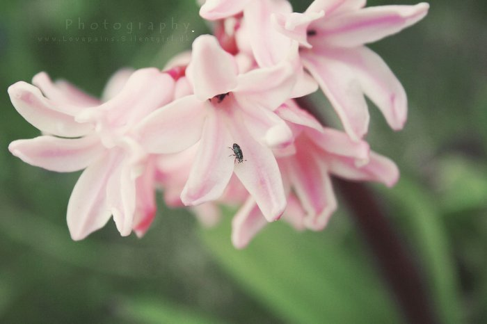 beautiful, bug, flowers, lovely, nature